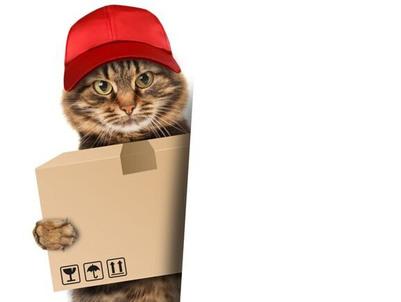 Funny cat - delivery service